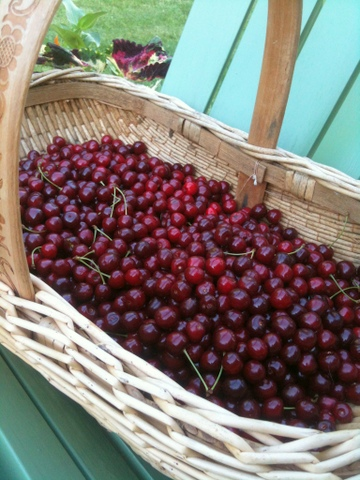 red cherries in a basket-001