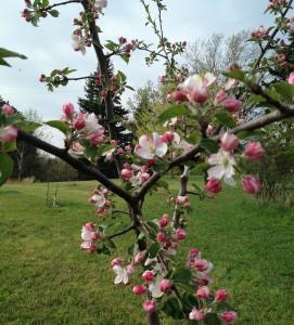 Vegan Spring Fever Trees