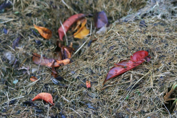 Top 7 Reasons to Compost
