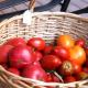 Tomatoes Garden Dish Gardens Vegan Organic
